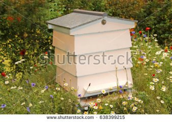 stock-photo-a-white-wooden-beehive-in-a-wild-flower-meadow-638399215