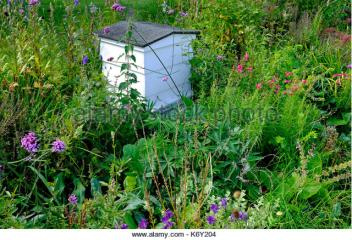 white-painted-bee-hive-in-garden-flower-bed-cambridge-england-k6y204